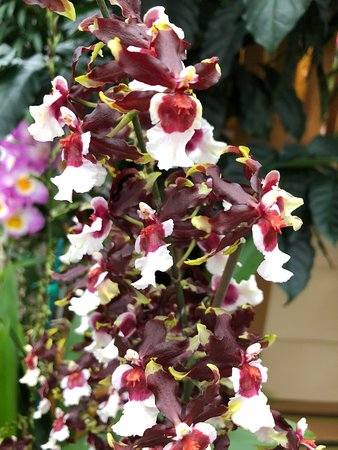 orchid tours and travels reviews